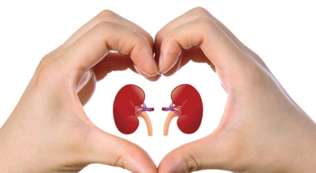 This One Ingredient Can Help Repair Your Kidney