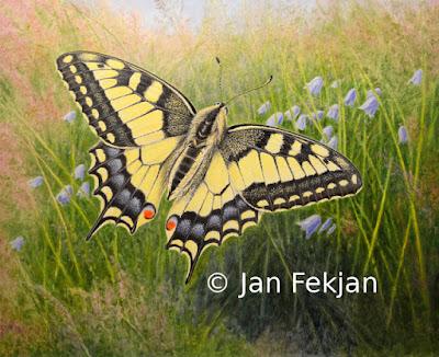 Bilde av digigrafiet 'Svalestjert'. Digitalt trykk laget på bakgrunn av maleri av gul sommerfugl. Illustrasjon av Svalestjert, Papilio machaon. Hovedmotivet er en gul sommerfugl med svarte tegninger. Bakgrunnen er ei eng med blåklokker og grass. Bildet er i breddeformat.