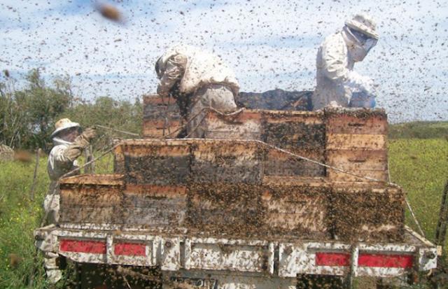 Μελισσοκομικοί Χειρισμοί Ιουνίου: Ο μήνας της ανταμοιβής των μελισσοκόμων!!!