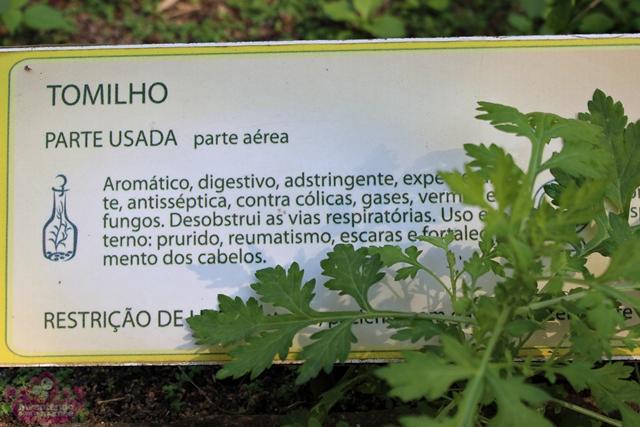 Plantas Medicinais no Jardim Botânico do Rio