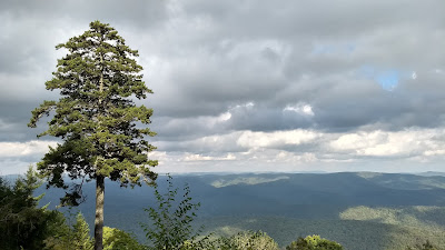 West virginia appalachia restoration red spruce lambert's strip gaudineer's knob