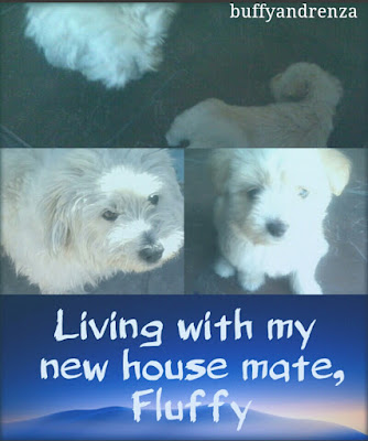 Living with my new house mate, Fluffy.- buffyandrenza.blogspot.com