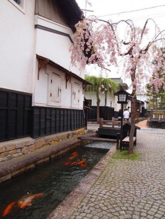 Kejernihan Air Longkang Sebuah Kampung Di Jepun Tempat Pembiakan Ikan Koi