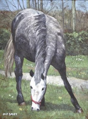 grey_spotted_horse_in_field