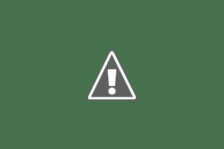 bunga hias,asphorbia,taman hias