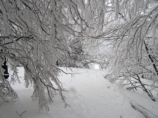 Zimowy zagajnik.