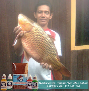 Essen Umpan Ikan Mas Babon