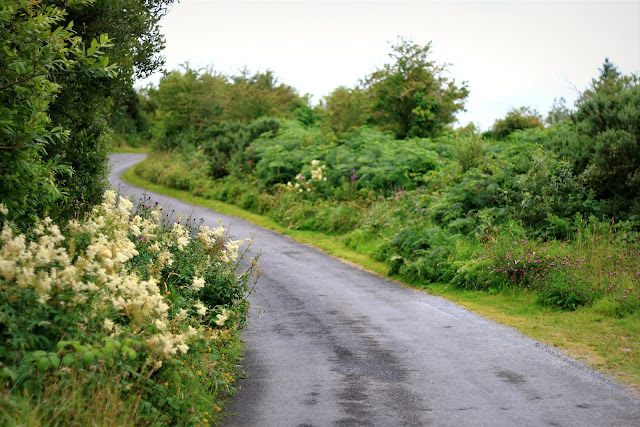 meadowsweet plants on the side of a road in Connemara