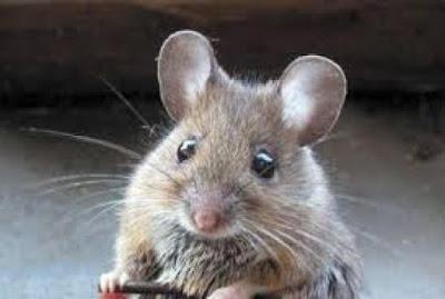 Παράγγειλε φόρεμα από το ίντερνετ και είχε πάνω του ραμμένο ένα ποντίκι