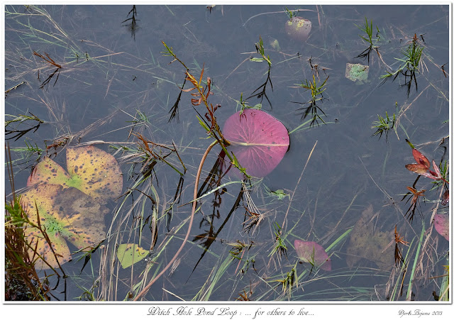 Witch Hole Pond Loop: ... for others to live...