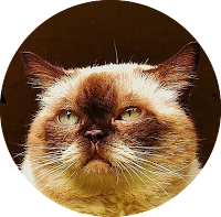 circular png image of cat with transparent background