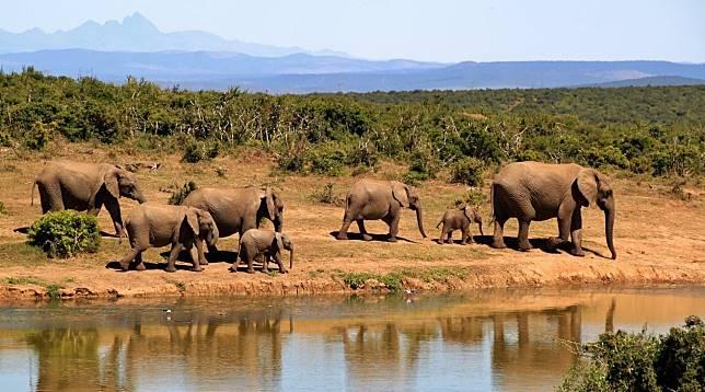 Ingin ke Afrika Selatan Pertama Kali, Ini Hal yang Harus Kamu Tahu