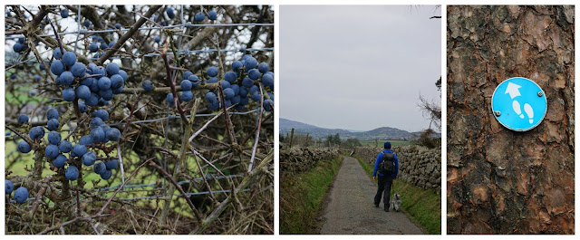 Countryside hiking and sloes galore - C. Gault 2019