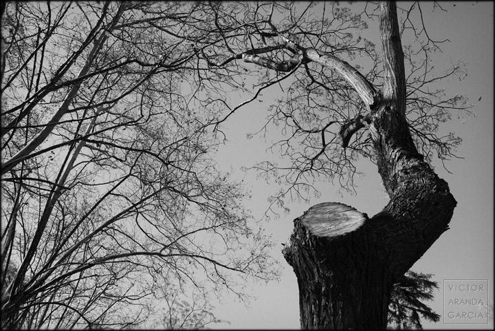fotografía, naturaleza, Valencia, árbol, ramas