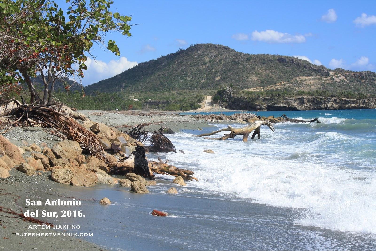 Кустарники и коряги на берегу Карибского моря