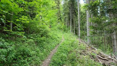 Schmaler Pfad durch den grünen Wald