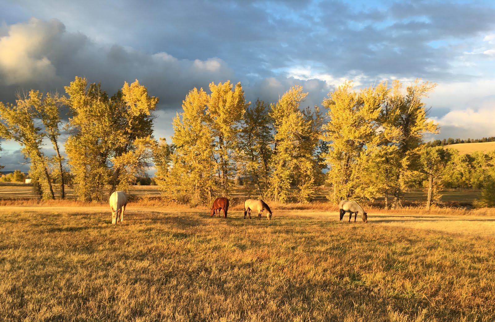 Fox Crossing Farm Montana horses wedding