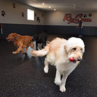 Greatmats rubber flooring rolls RioGran dog boarding