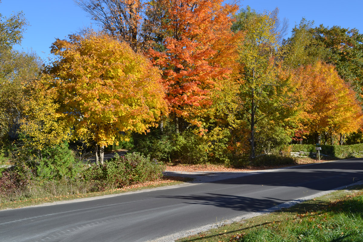 A driveway entrance along a country road flanked by trees in fall colours.