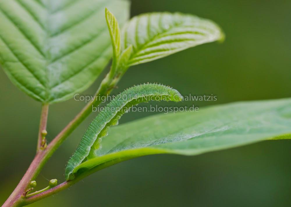 fliege grüne augen
