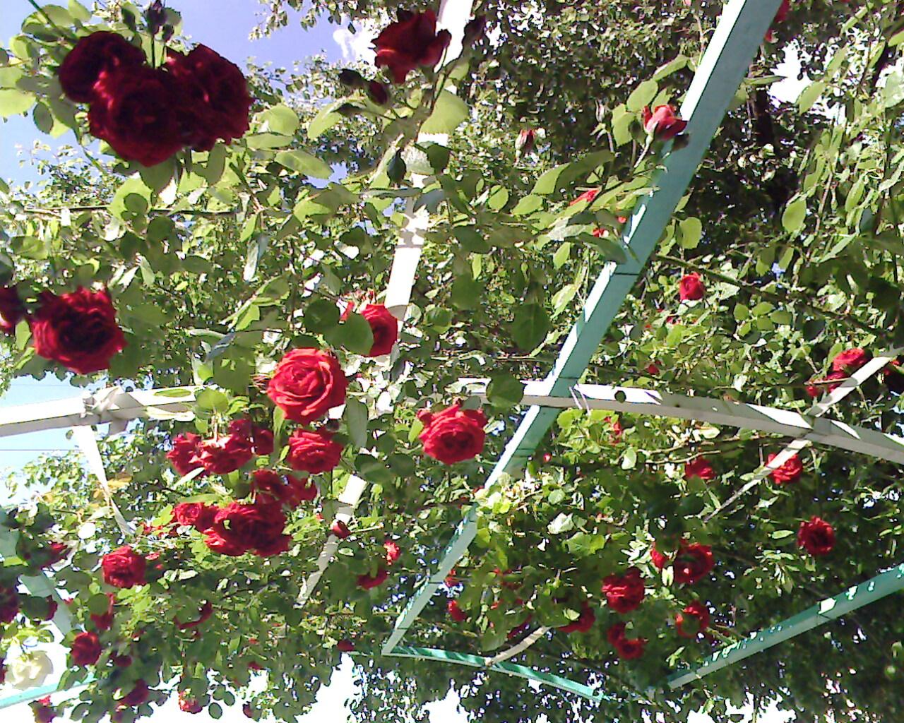 Hobisayfam Baharda Açan çiçekler