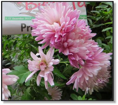 Blumen im Garten zum ersten Advent