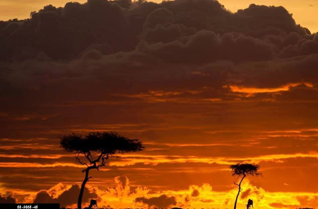 Golden African sunsets on Masai Mara!