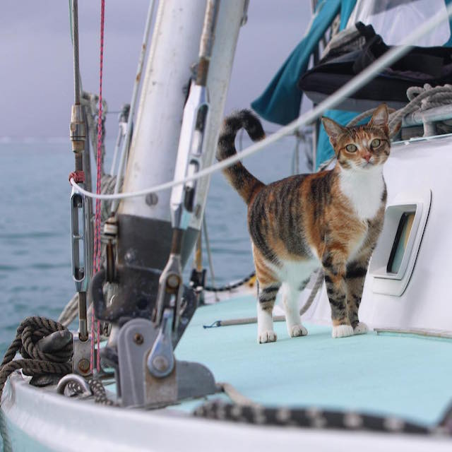 The Woman Is Sailing Around the World With Her Cat
