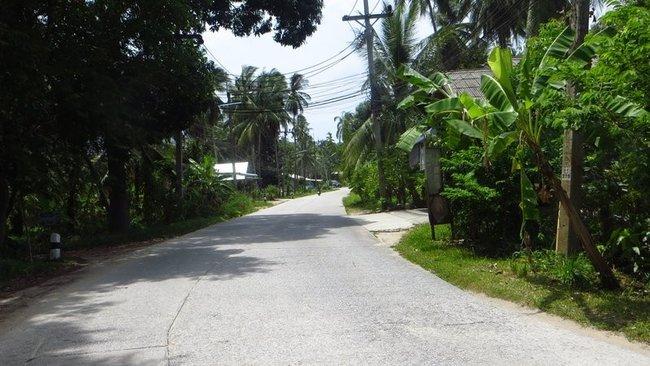 Дорога пальмы