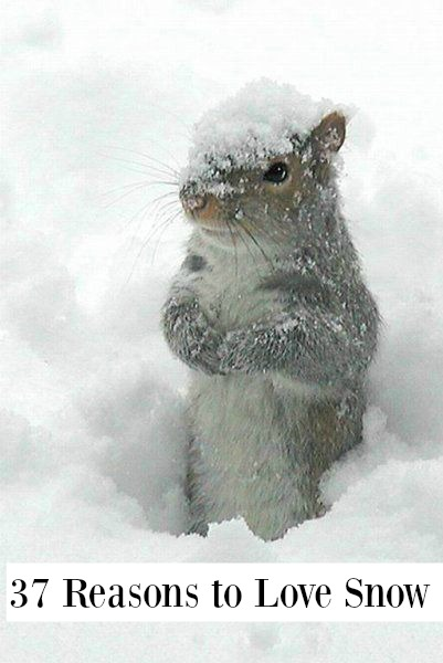 Adorable animals in winter - Squirrel happy and cute in snow