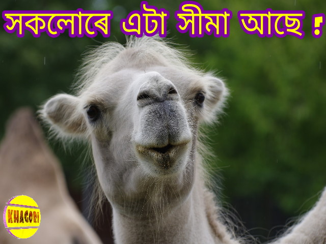 Assamese FB Photo Comment