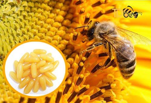 cách bảo quản sữa ong chúa dạng viên nang