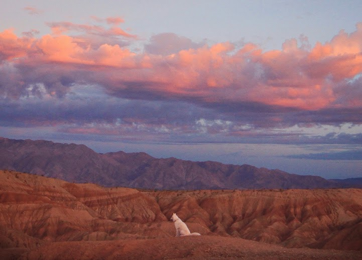 Anza-Borrego, California - He Toured America's Pristine Wilderness…And He Took His Human Along For The Ride.