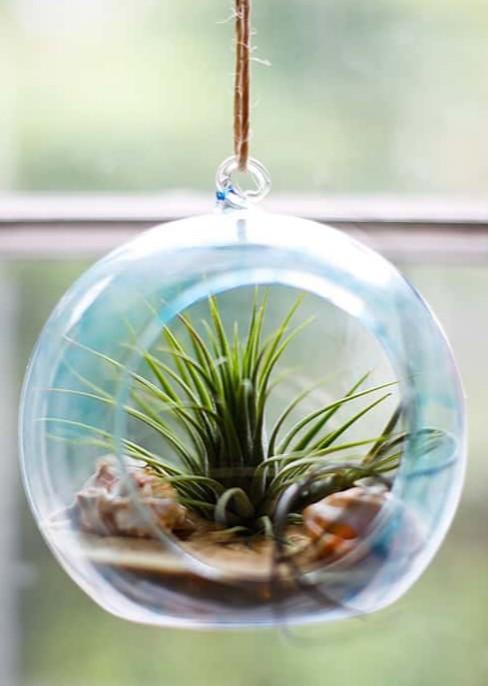 DIY Hanging Beach Terrarium in Glass Globe