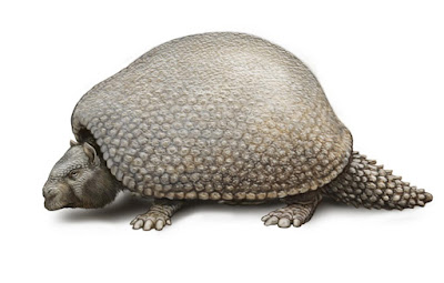 Extinct glyptodonts really were gigantic armadillos, ancient DNA shows