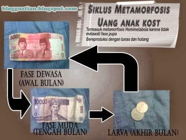 Siklus Metamorfosis uang anak kost