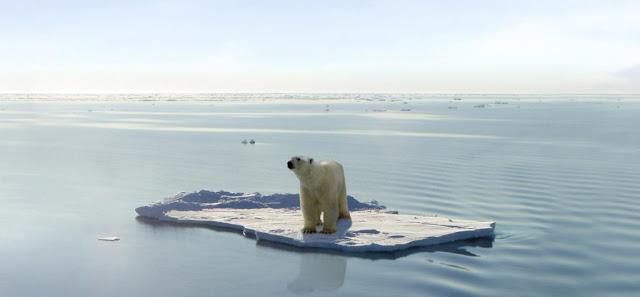 Oso polar en un tempano de hielo