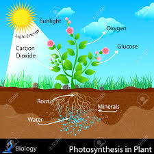 Funcion del dixido de carbono en la fotosintesis 76