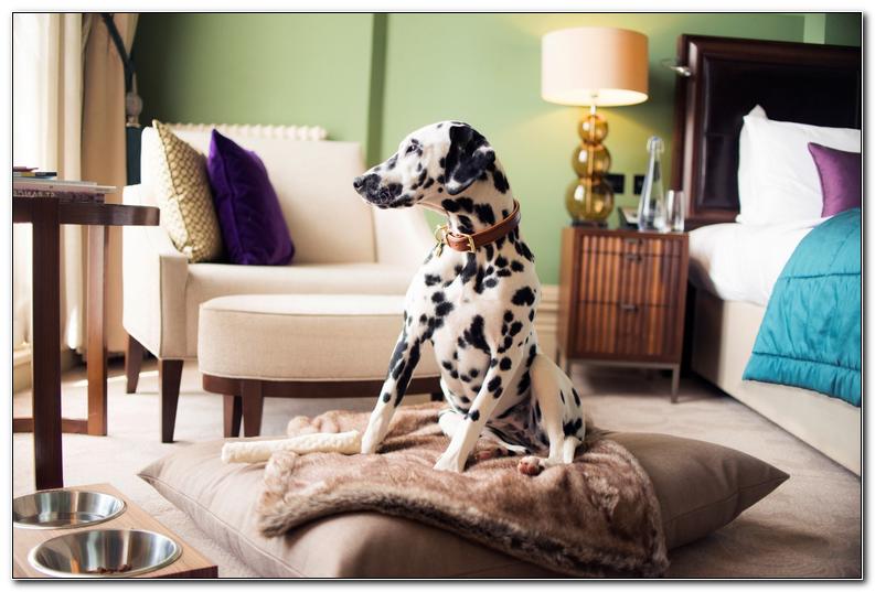 Best Pet Friendly Hotels Asheville Nc