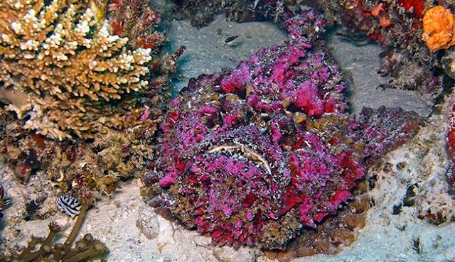 سمكة-الحجر-اخطر-حيوان-في-العالم
