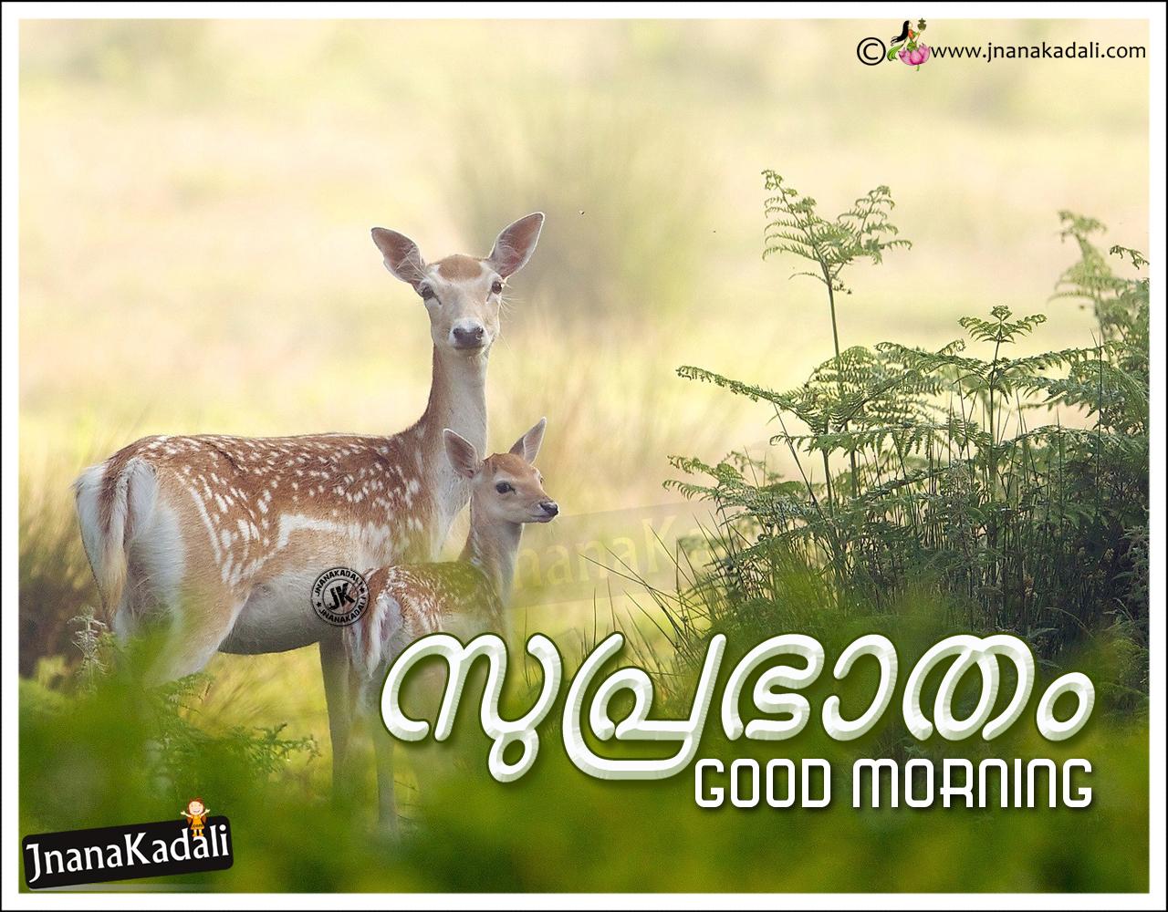 elegant good morning messages