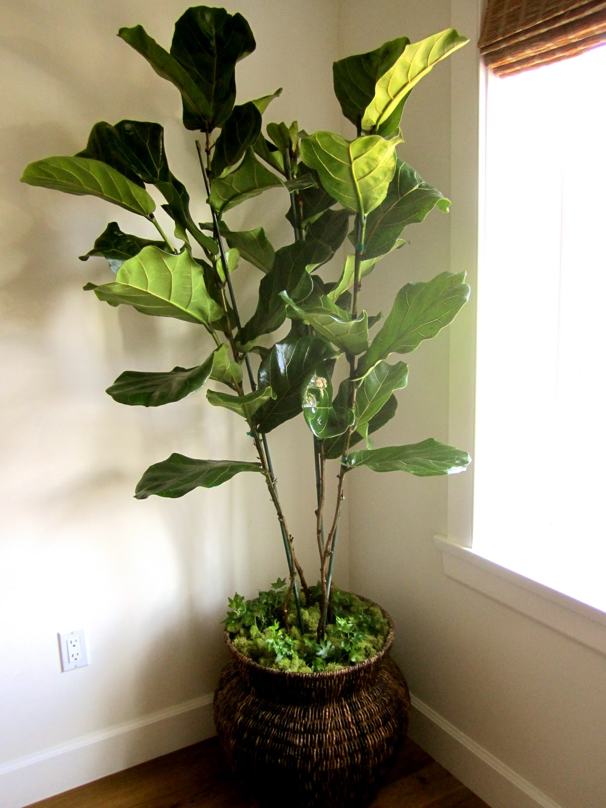 Good Large House Plants Classic Casual Home Real Vs Artificial House Plants