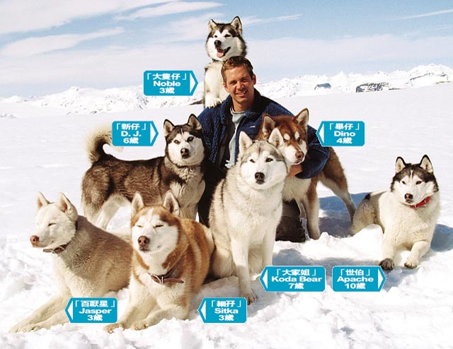 eight below dog names that died