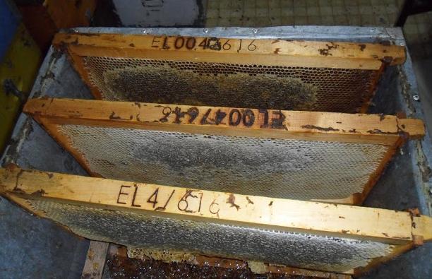 Ποιος χειρισμός δίνει περισσότερο μέλι, όταν έχουμε μικρά μελίσσια;