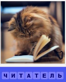сидит кошка рядом с открытой книгой, пытаясь читать