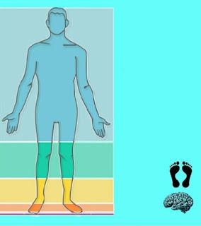 Corpo umano scratch