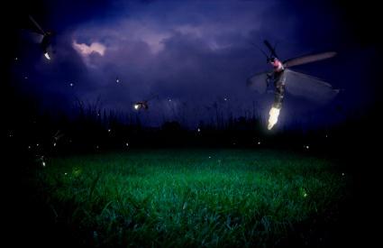 Gambar Kunang Kunang di Malam Hari  Kumpulan Gambar