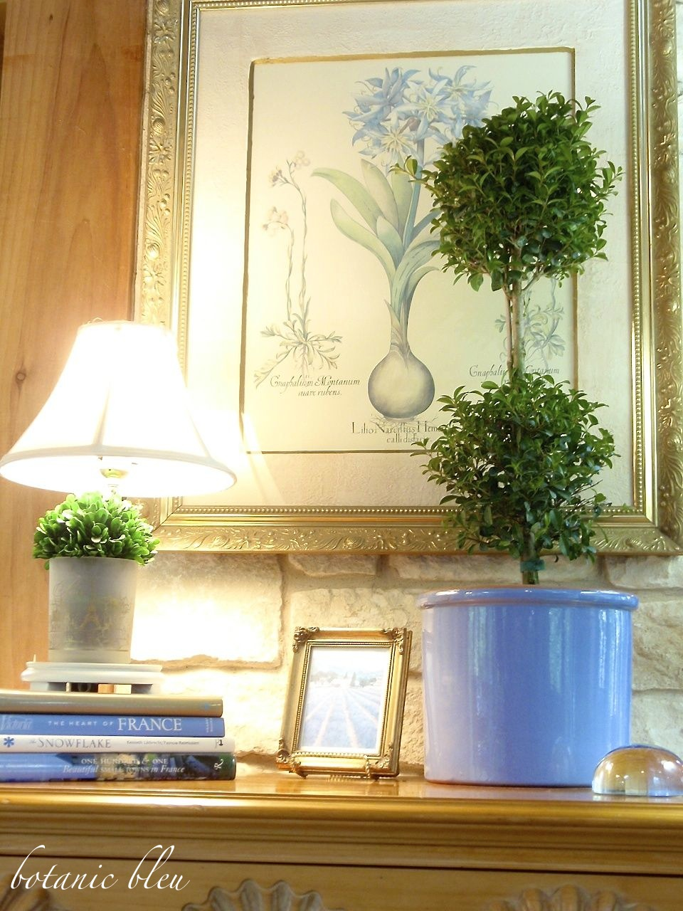 things-to-look-for-when-buying-topiaries