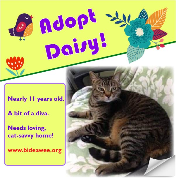 Adopt Daisy! She's a diva in need of a loving home. Westhampton, NY. www.bideawee.org