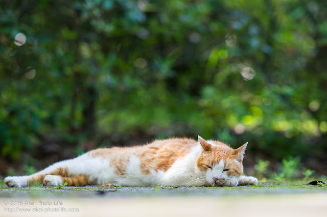 こんな人間いるよねって感じの猫 「お昼寝気持ちいいわぁ~」